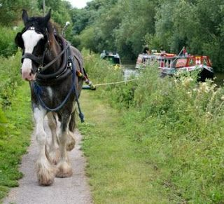 Horse towing narrowboat