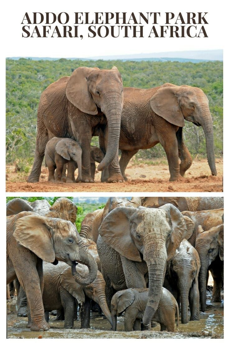 What to expect from Addo Elephant National Park self-drive