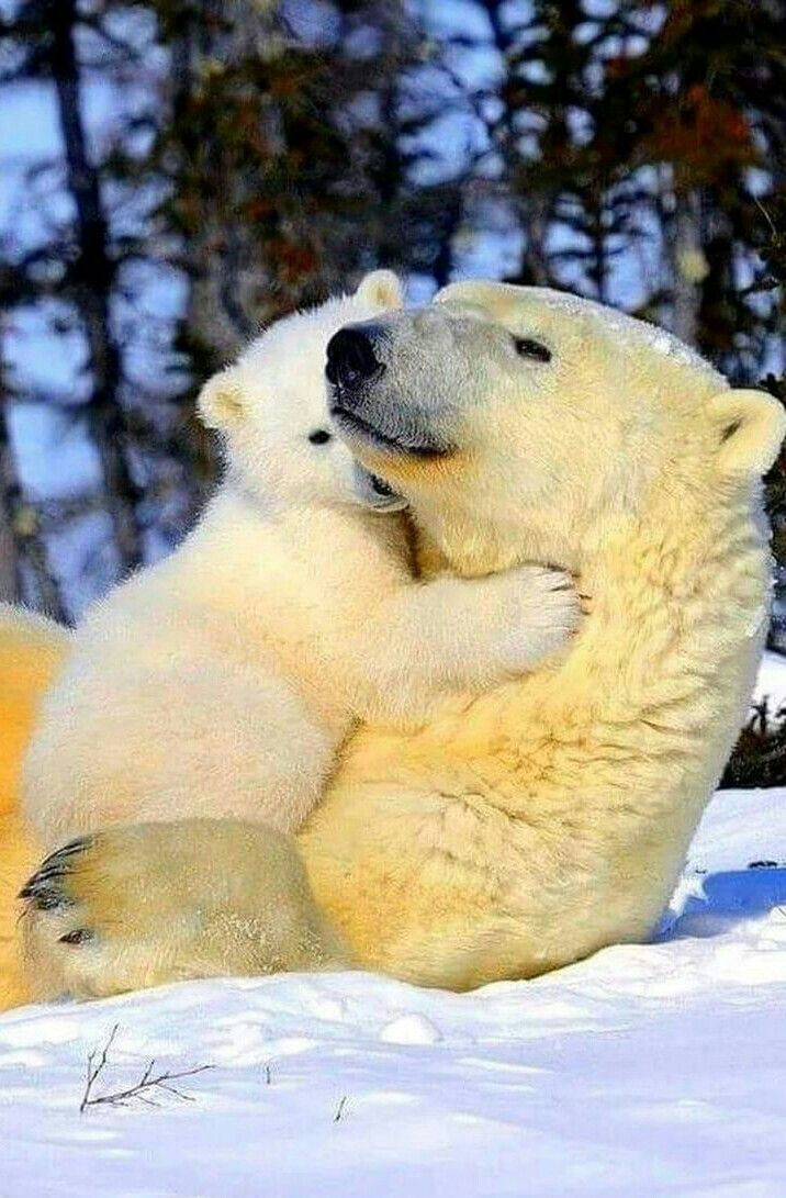 A Snuggle With Mom!