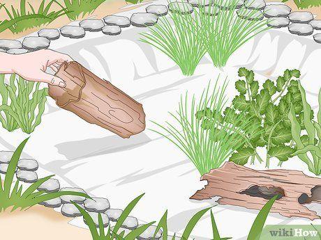 How to Build a Frog Pond in 2020 | Pond habitat, Ponds ...
