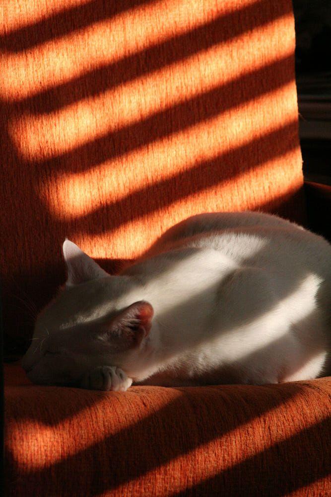 Sundown kitty.