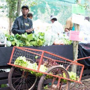Fourways Farmer's Market
