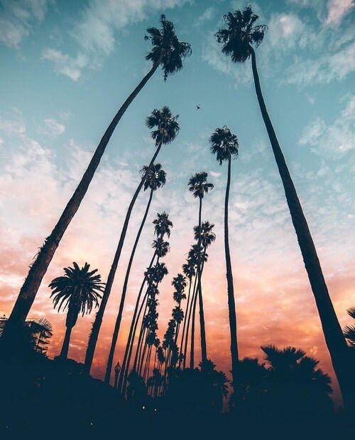 I like this picture because of the different colors in the sunset against the palm trees.