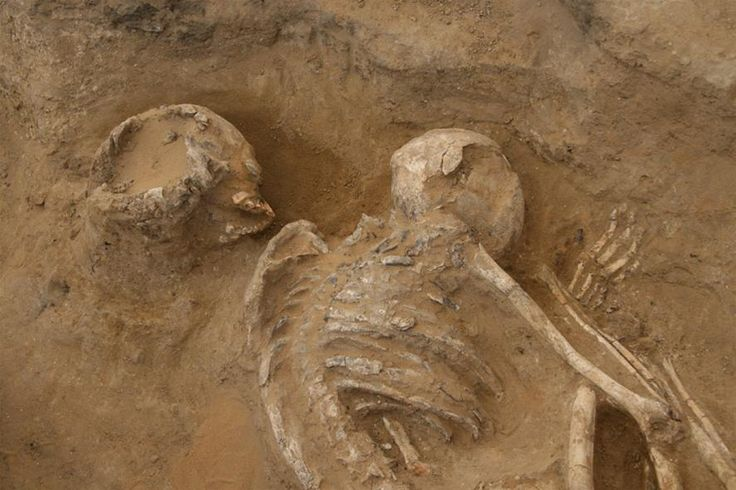 Poles discovered a unique 6.5 thousand years old burial in Egypt | News | Science & Scholarship in Poland