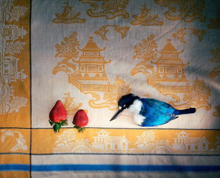 "'Kingfisher with Chinese cloth and strawberries' from Marian Drew's ""Still Life/Australiana"" series"