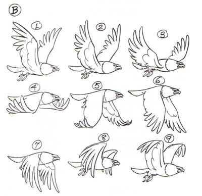bird flight flapping animation step-by-step                                                                                                                                                      More