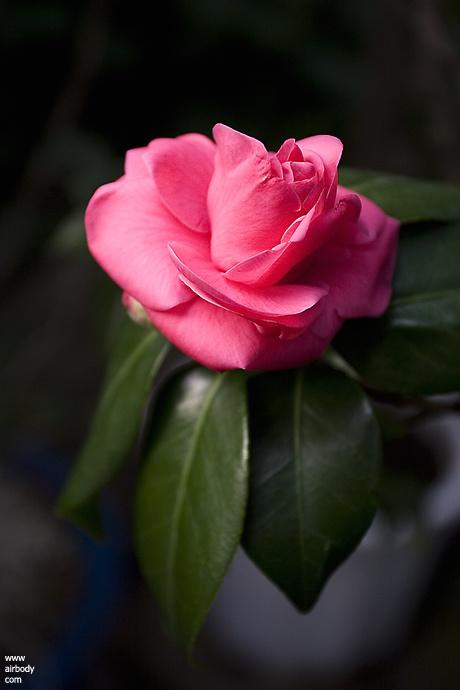 2005/12/10   남산 식물원