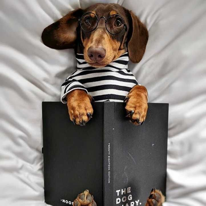4 Reasons Dogs Are The Best Company A Writer Can Have Dog Books
