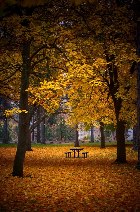 """""""Dad, how do soldiers killing each other solve the world's problems?""""  ― Bill Watterson/Fall Picnic Table, High Bridge Park, Spokane, WA"""