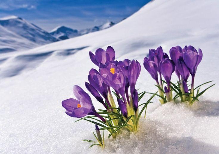 Wordless Wednesday #Spring
