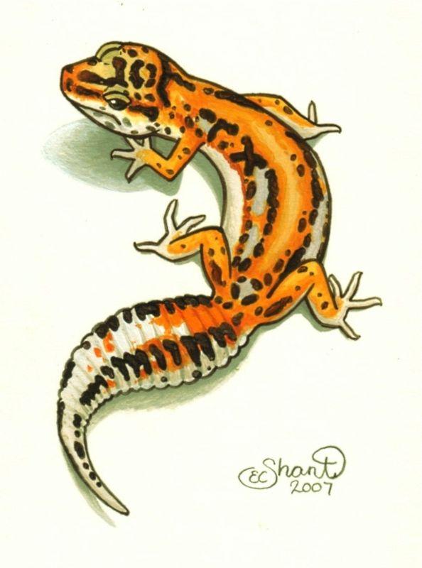 Leopard Gecko Tattoo Design by ShantiCameron.deviantart.com on @deviantART