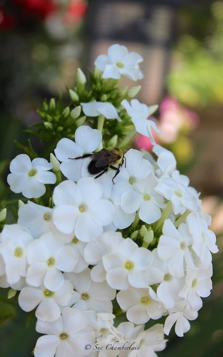 17 Best images about Butterflybee garden ideas from The
