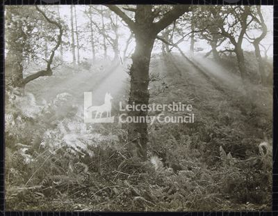LS1233 - Misty sunrise at Bardon Hill, Leics