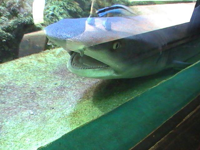 žralok v mořském akváriu