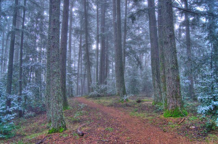 10 Best Hikes Near Sj Images On Pinterest Hiking