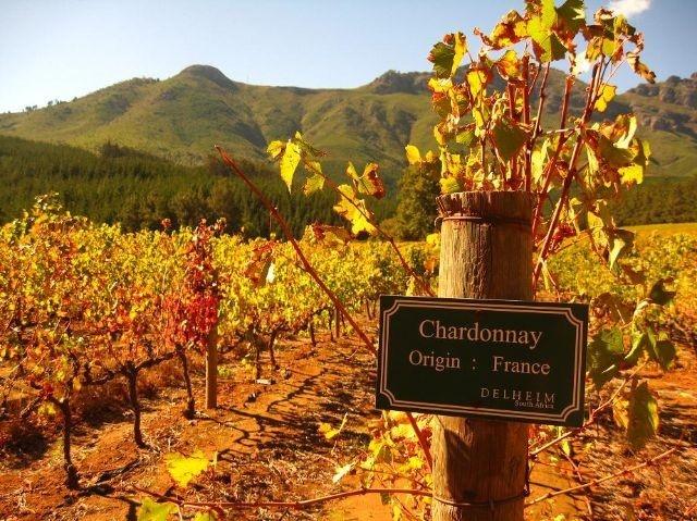 Delheim Wine - South Africa! Been there!! Did a tour at Delheim, love their Spatz wine..