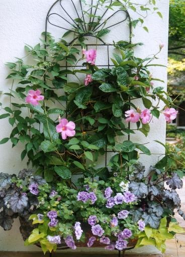This Container Features A Mandevilla And Clematis On A