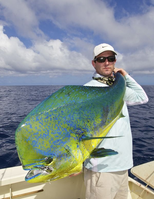 Dolphin (Mahi Mahi or Dorado) -  Seatech Marine Products / Daily Watermakers