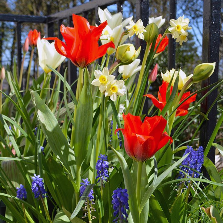 early spring flowers pictures - photo #47