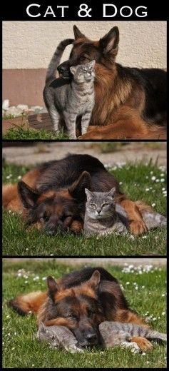 Le coppie più strane del 2012 Dog and cat