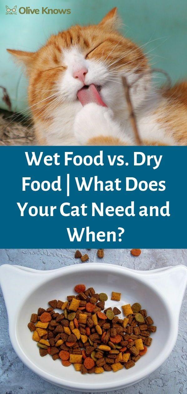 Wet Food vs Dry Food Dry cat food, Common food allergies