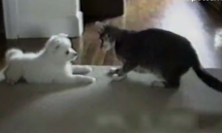 Cat teaches dog how to roll overTeaching Puppies, Typical Dogs Cat, Teaching Dogs, Dogs Cat Interactive, Cat Teaching, Meow Cat, Furries Families, Cat Galore, Animal