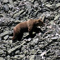 La Fundación Oso Pardo (FOP), constituida en 1992, es una ONG conservacionista creada con el objetivo de contribuir al estudio y conservación del oso pardo, de su hábitat y del entorno cultural en el que se desenvuelve esta especie amenazada.