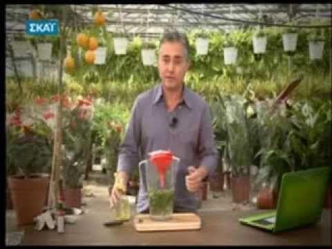 Τσουκνίδα για τα φυτά Πως θα χρησιμοποιήσετε τη τσουκνίδα σαν εντομοκτόνο και ενισχυτικό των φυτών σας