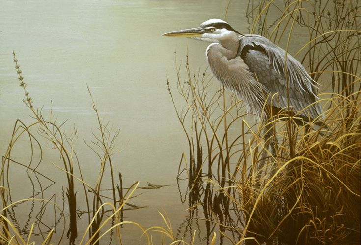 Running into a Great Blue Heron never gets old and we are always running into them at Bear Creek, ...