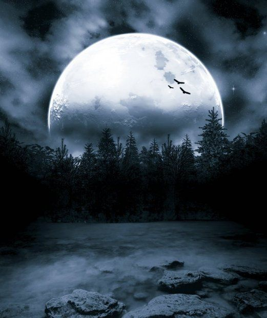 Для, картинки лунная ночь в лесу