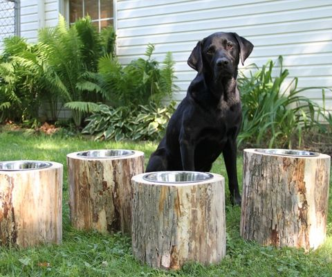 Best 25 Dog Bowls Ideas On Pinterest Elevated Dog Bowls