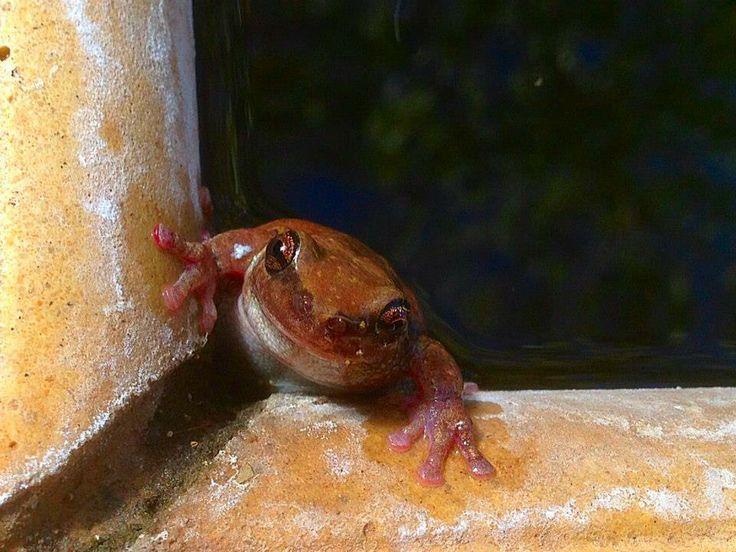 A special guest enjoying the Lotus Pond at Vatu Sanctuary... www.vatusanctuary.com.au