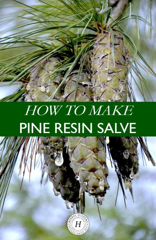 how to make pine resin