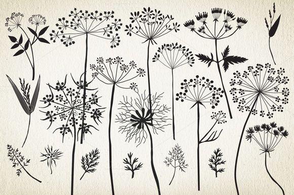 Botanical elements. More than 68! - Illustrations - 2