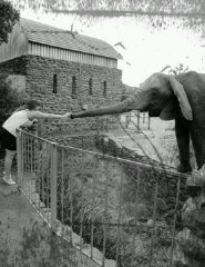 Touching an elephant in a zoo