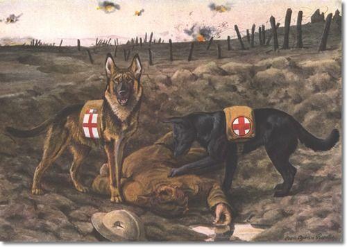Police Dog German Shepherd Amp Belgian Shepherd By Louis