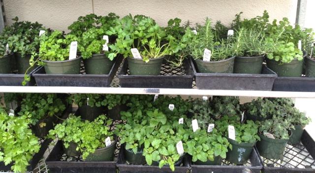 Huerto en casa: Como cultivar cilantro, perejil, albahaca y hierbas | En mi cocina hoy
