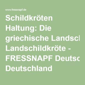 Schildkröten Haltung: Die griechische Landschildkröte - FRESSNAPF Deutschland