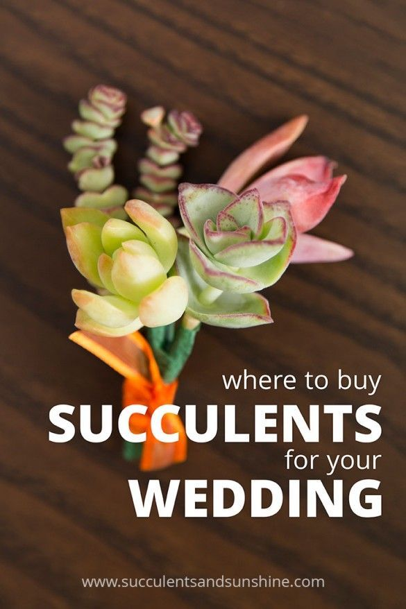 If you've considered using succulents for your wedding or event, this is the post for you! The best place to buy wedding succulents online!