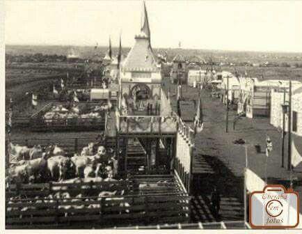 1 Exposição em destaque gado Zebu, 1911