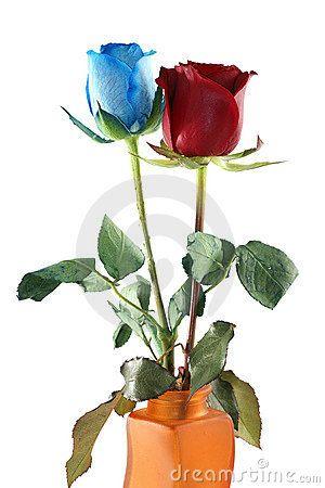 Imagen Rosas Rojas Con Azules Buscar Con Google Flores En Tazas