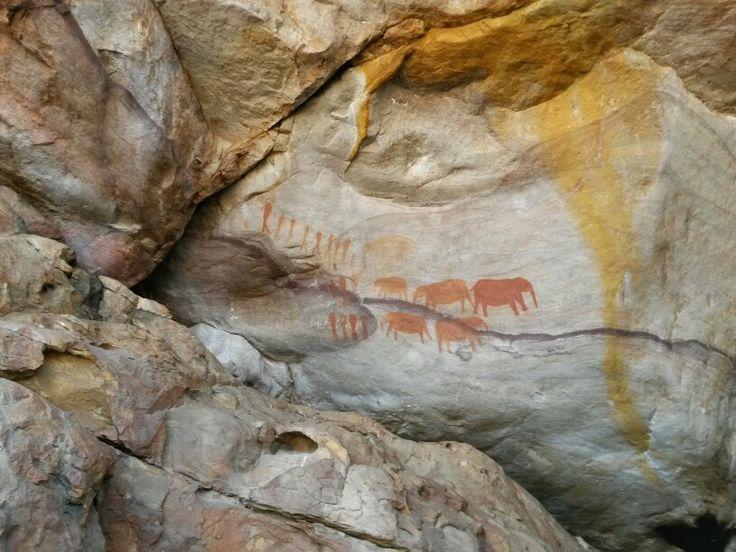 Rock paintings Cederberg