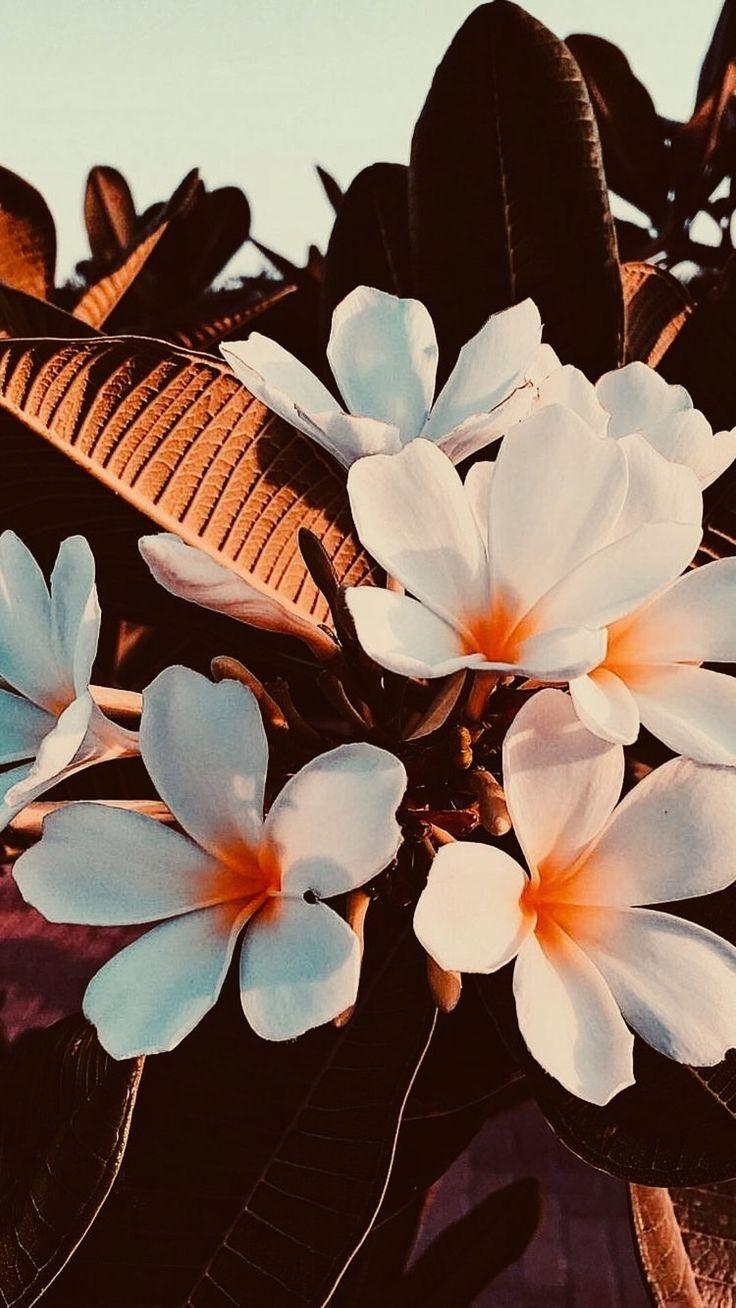 Orange flowers ➰