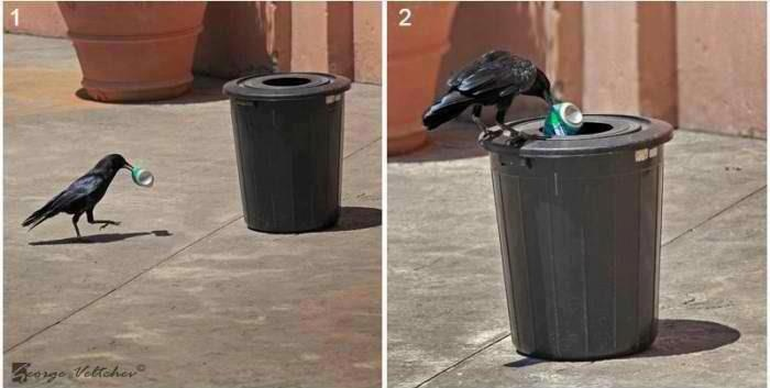 Bird is superior than Human...... 人都比不上烏鴉了.....