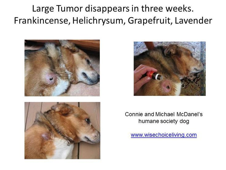 Large Tumor Disappears in 3 Weeks- Oils for dogs