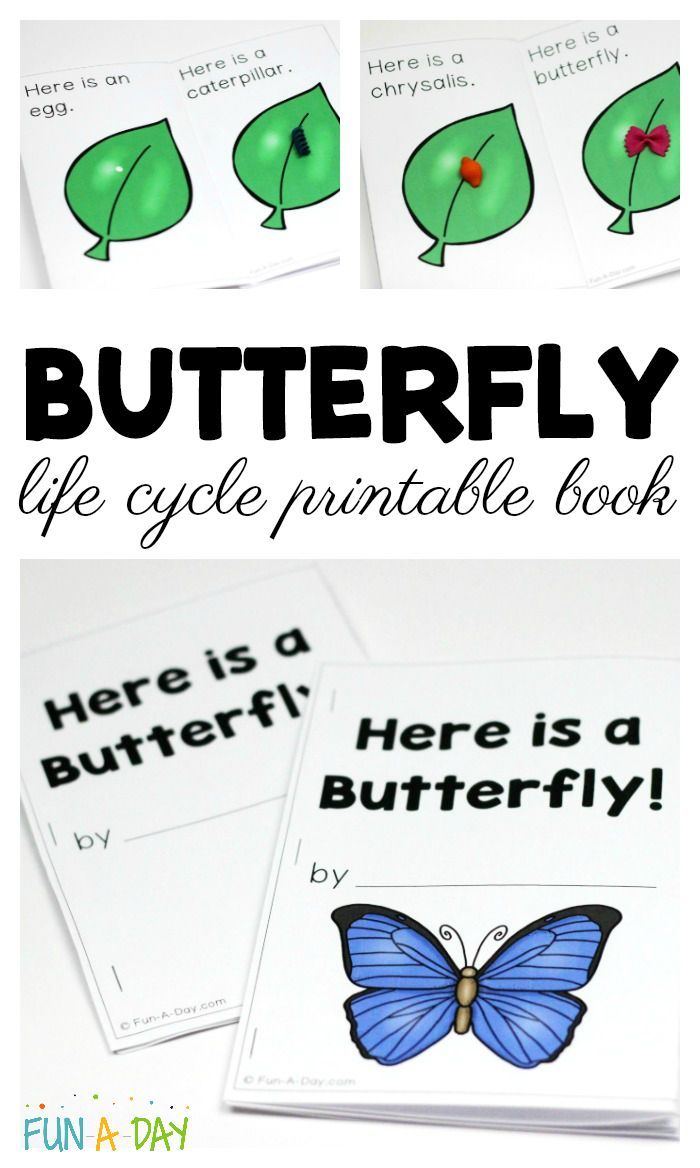 Butterfly Life Cycle Printable Book For Preschool And Kindergarten Fun A Day Butterfly Lesson Plans Butterfly Life Cycle Kindergarten Books [ 1168 x 700 Pixel ]