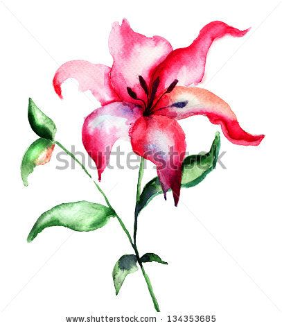 Red Lily flower, watercolor illustration by Regina Jershova, via Shutterstock