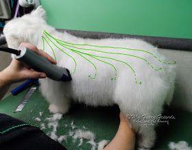 Westie grooming ...