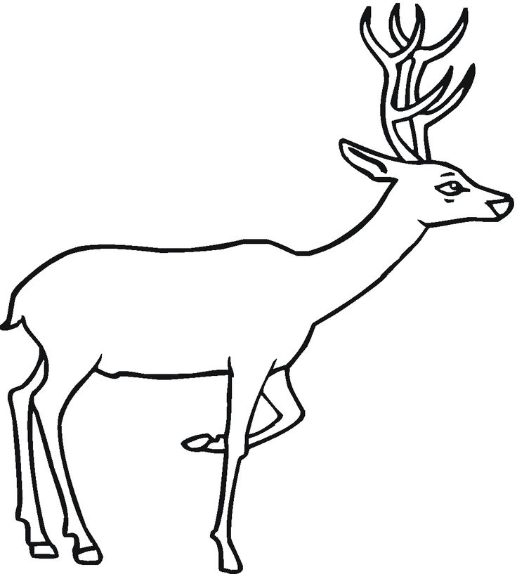13 best Deer Coloring Pages images on Pinterest | Frei bedruckbar ...
