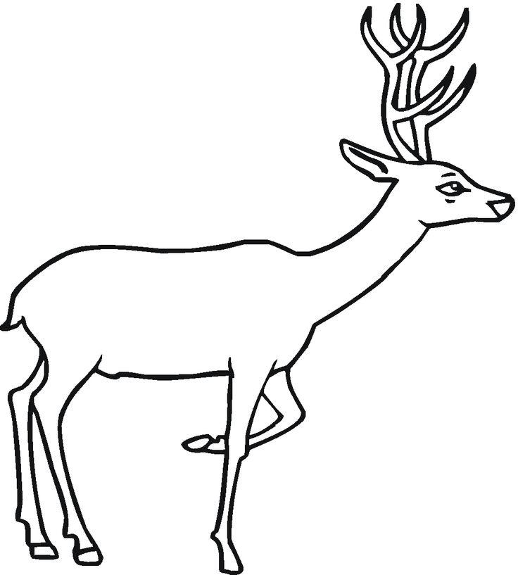 13 besten Deer Coloring Pages Bilder auf Pinterest   Frei bedruckbar ...